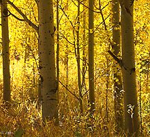 Golden Forests Of Autumn by John  De Bord Photography
