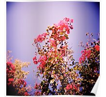 A Haze of Flowers Poster