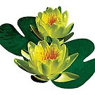 Two Yellow Water Lilies by Susan Savad