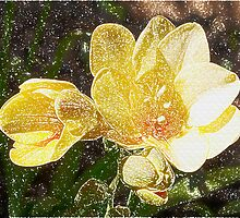 Freesia Woodcut by Brenda Anderson