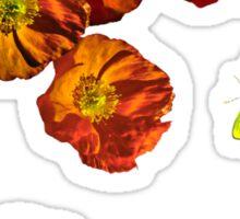 Poppy delight  Sticker