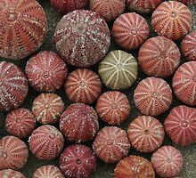 Urchins by catdot