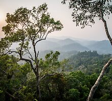 Nam Kan forest from a tree house by Thomas Calame