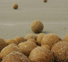 Seagrass balls at Middleton by catdot