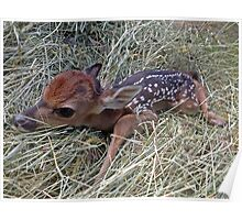 Welcome To The World Little Fawn Poster