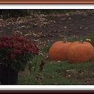 Pumpkins Waiting In the Night by Starr1949