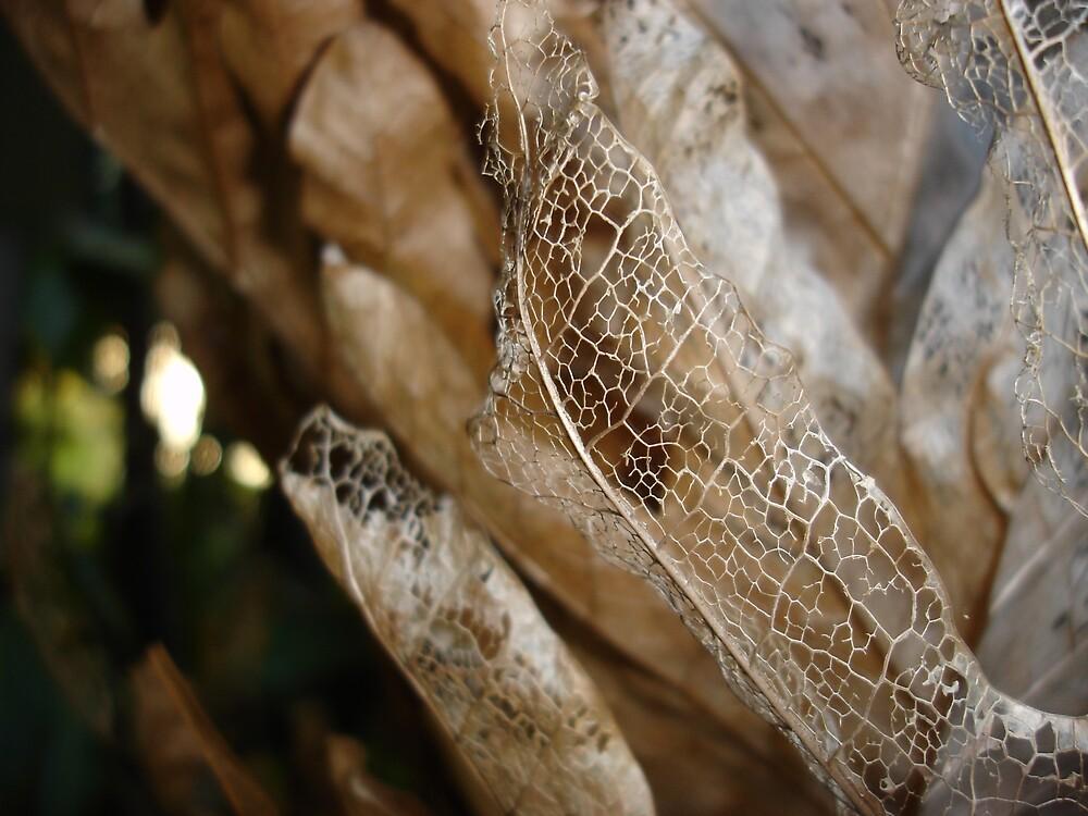 Skeleton Leaf by Kym Smitt