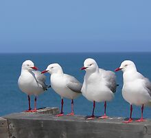 Seagulls by Jacko