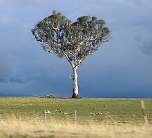 Tree of Heart(s) by berndt2