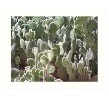 Bunny Ears, Polka Dot Prickly Pear Cactus 2035 Art Print