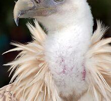 Eagle head by Rangorn