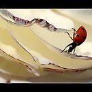 Ladybug4 by Ellen van Deelen