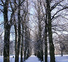 Winter Wonderland by Edward Gunn