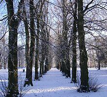 Winter Playground by Edward Gunn