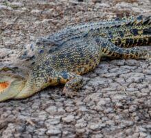 Crocodile Kakadu Sticker