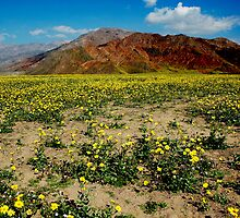 Death Valley by Bill Serniuk
