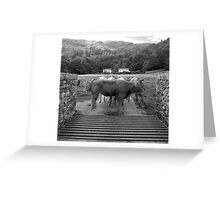 Cattle at Grasmere Greeting Card