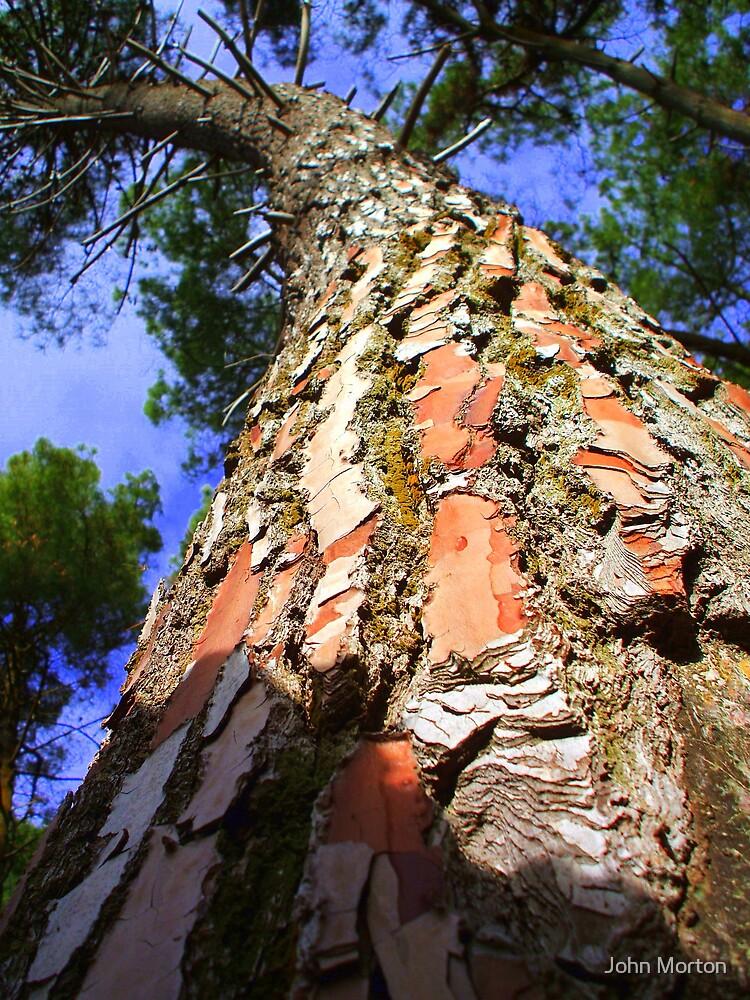 Tree by John Morton