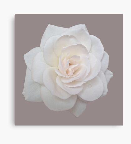 Elegant White Rose Canvas Print