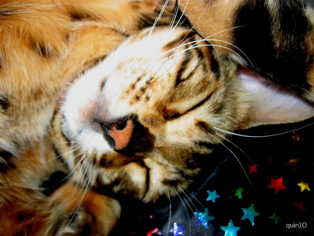 Zen's Cat Nap by quin10