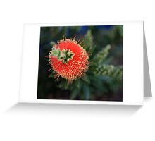 Callistemon (bottlebrush) Greeting Card