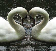 Swans by Luci Mahon