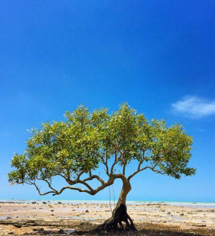 Lone Tree Roebuck Bay Broome Western Australia Sticker