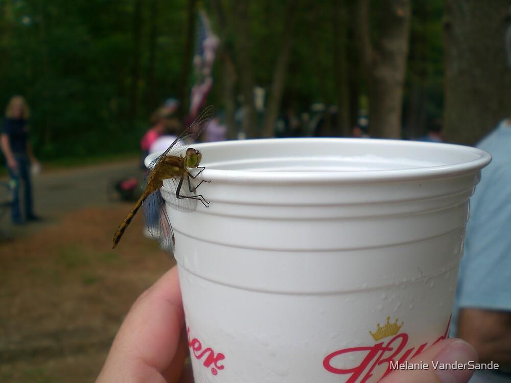 Dragonfly drinking a Budweiser by Melanie VanderSande
