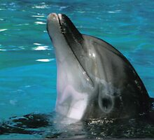 Dolphin Friend by christyashe