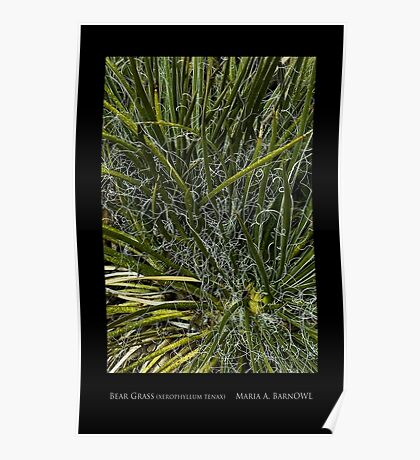 Bear Grass - Cool Stuff Poster