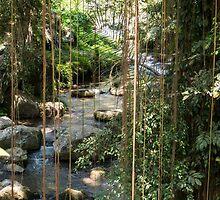Rainforest Stream Bali by redashton
