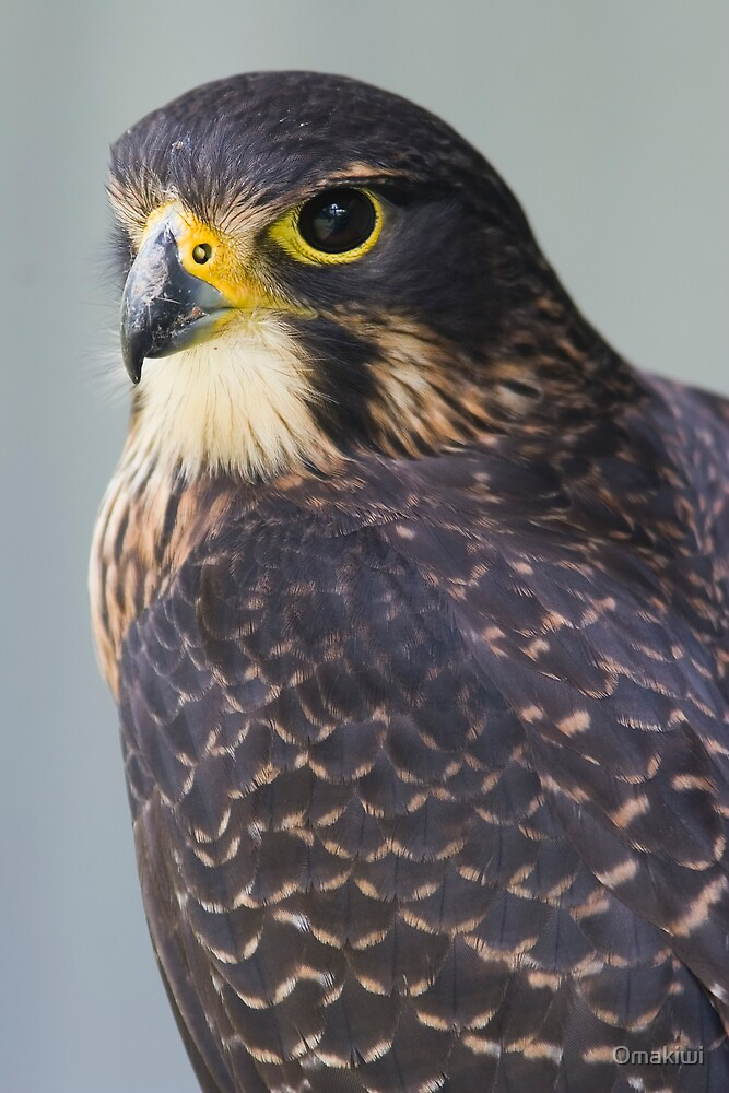 New Zealand Falcon by Omakiwi