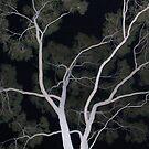 ghost tree by LenaMay