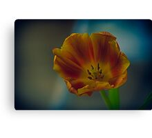 beautiful orange and yellow tulip Canvas Print