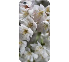White As Spring Blossom iPhone Case/Skin