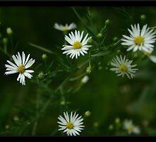 Morning Glory Misunderstood by Shatteredwings