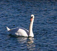 Island Swan by LindaLou1952