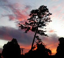 sunset pine by Robin Harrison