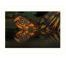 Box Turtle Reflection Art Print