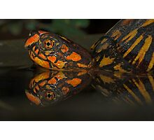 Box Turtle Reflection Photographic Print