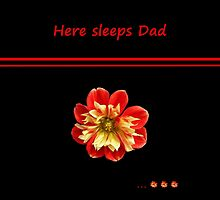 Dahlia red-yellow - Here sleeps Dad by Evelyn Laeschke