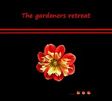 Dahlia red-yellow - The gardeners retreat by Evelyn Laeschke