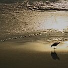 Gull in the spotlight by Pete Chennell