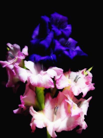 Gladiola Dreamin' by Maria Dryfhout