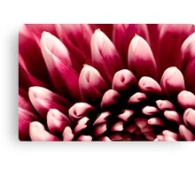 Small Petals Canvas Print