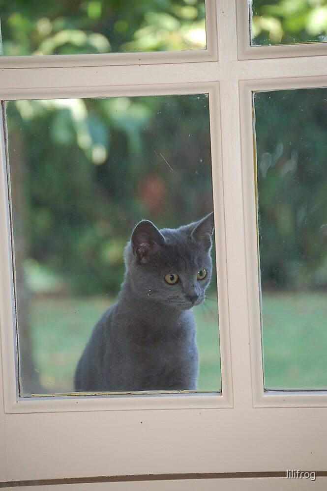 Chatouille à la fenêtre by lilifrog