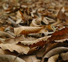 Forest Floor II by Laura Marsh
