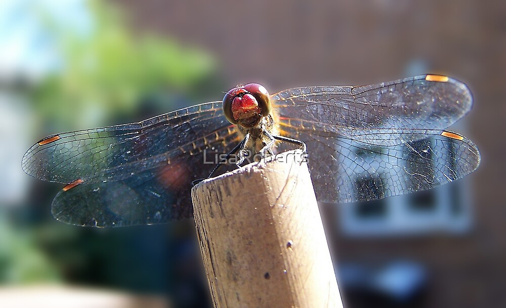 Red Dragonfly by LisaRoberts