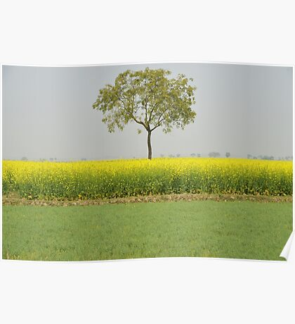 Beautiful Mustard field | Nature Photography Poster