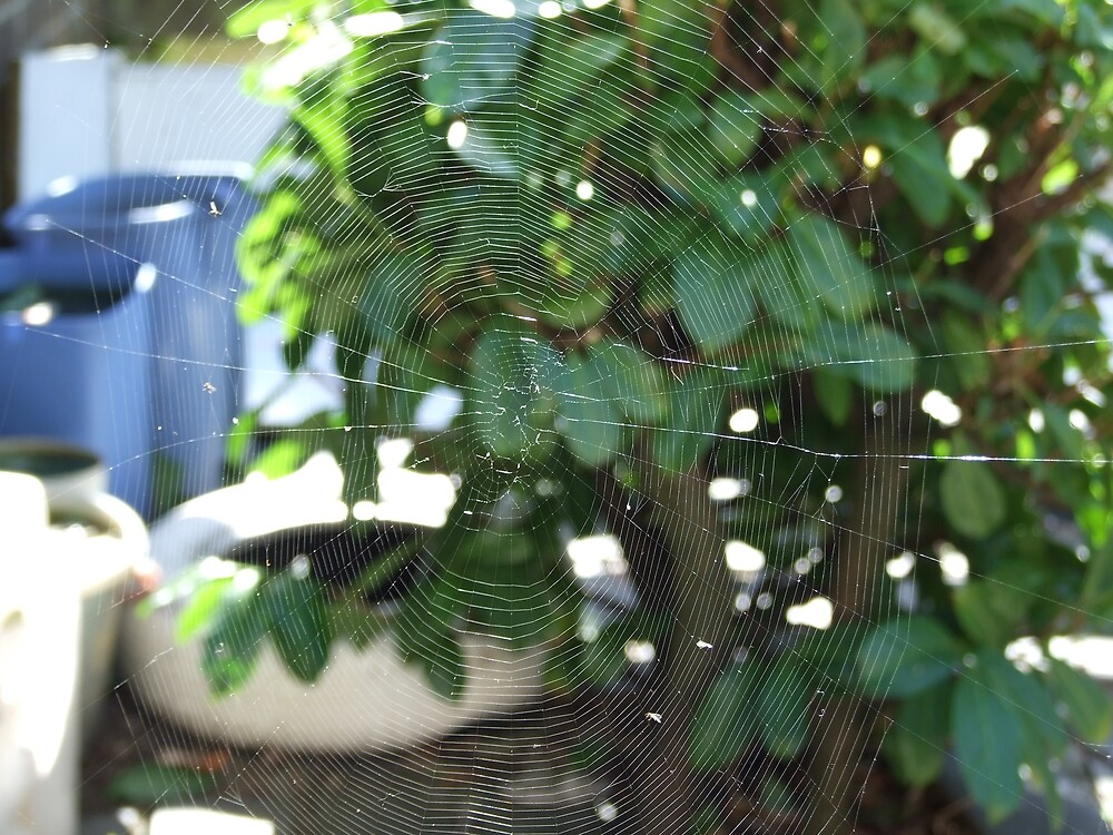 spider web by matjenkins